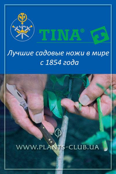 p-34735-tina_15.jpg
