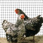 volernaya-setka-aviary