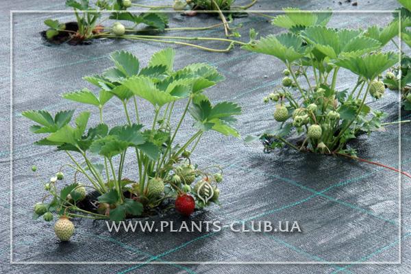 p-35698-agrotkanina_4.jpg