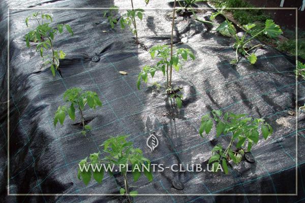 p-35698-agrotkanina_7.jpg