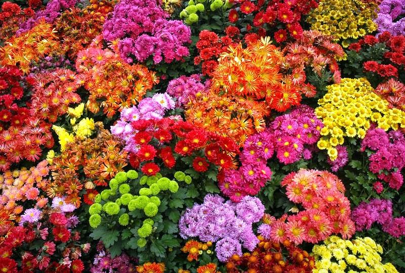 квіти, сад квітів, красивий сад, декор саду
