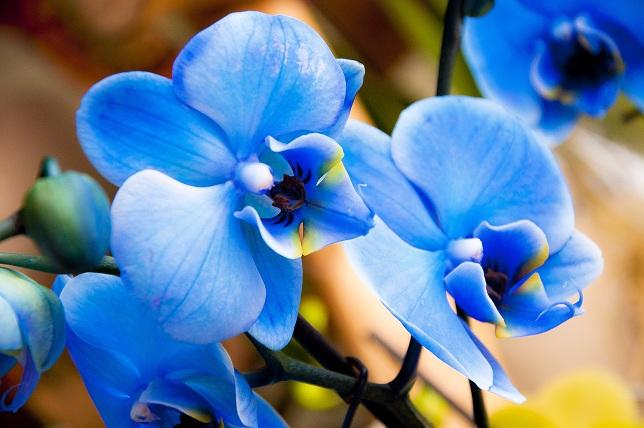 орхидеи, уход, советы по уходу, правила, сад, дом, растения, квіти, орхідеї,догляд, сад, рослини, правила, поради по догляду