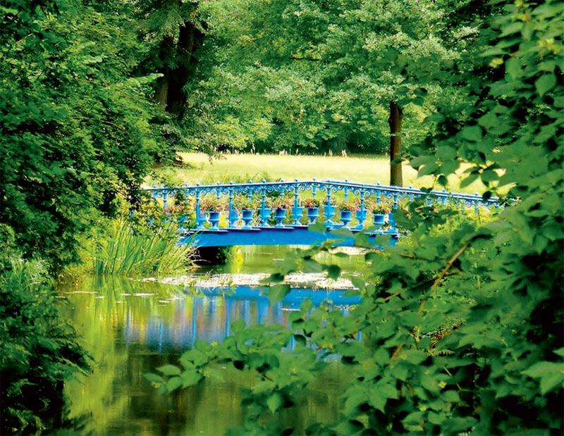 синий цвет, уход, растения, декор, сад, синій колір, декор, квіти, сад, догляд, рослини
