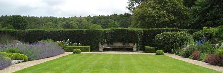 газон, трава, догляд, уход, сад, растения, рослини