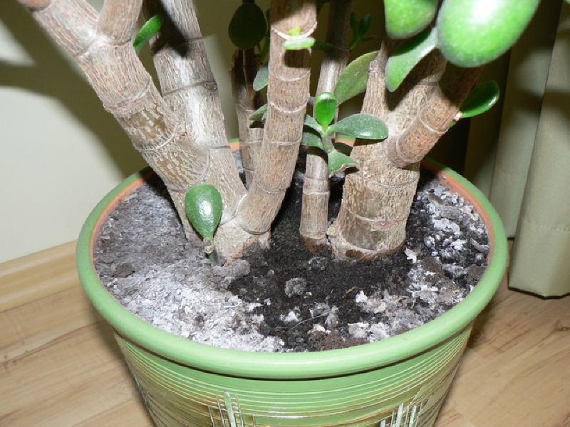 цвіль, наліт, догляд, сад, рослини, квіти, болезнь, растения, плесень