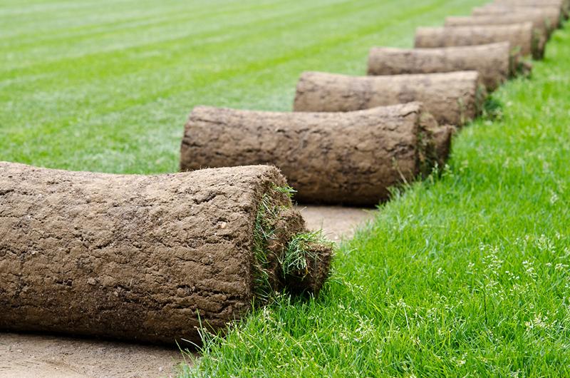 рулон, трава, сад, уход, растения,
