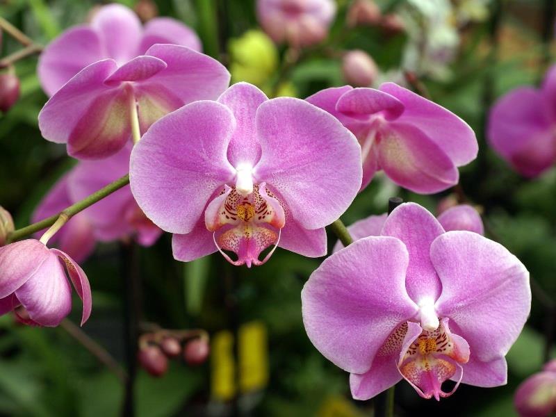 пересадка, орхидеи, сад, вазон, горшок, поливание, уход, советы, цветы, растения