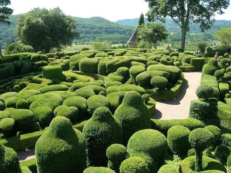 самшит, формування, підрізання, фігури, сад, уход, поливание, формирование, фигуры