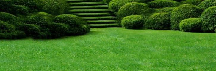газон, почва, грунт, земля, уход, посев, трава, советы, выбор, солнце, сад, растения
