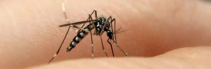 комары, укусы, избавится, растения, препараты, химикаты, лаванда, сад, уют, комфорт