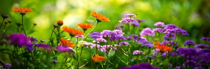 цветы, сад, растения, уход, декор, лето, цвести, поливать, жимолость, роза