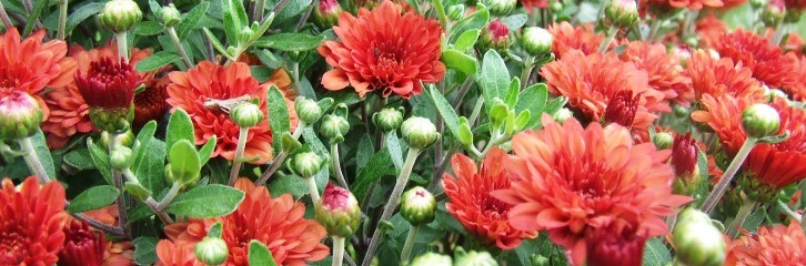 серпень, літо, догляд, сад, рослини, поливання, збирання, цвітіння, поради, уход, растения, советы