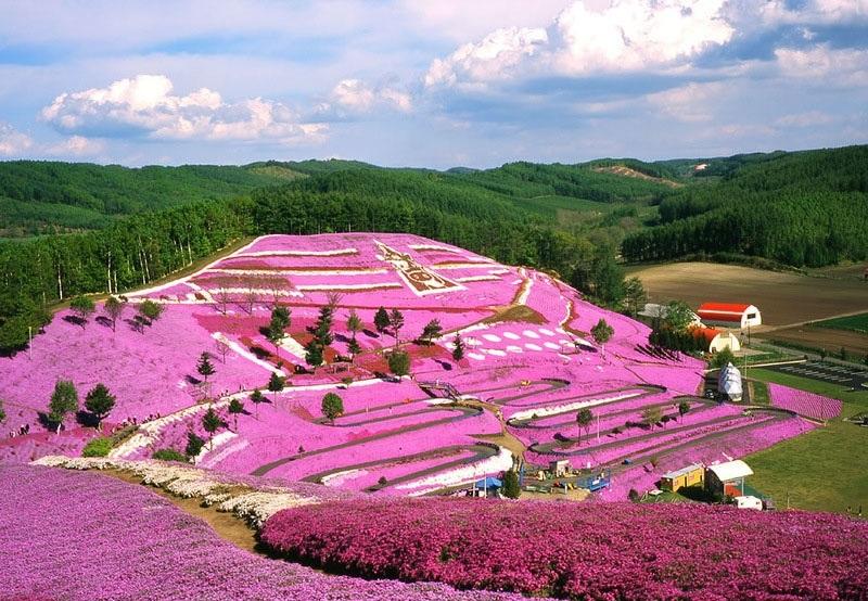 Hitsujiyama, Япония, сад, парк, уход, растения, красота, шиба-закура, рай