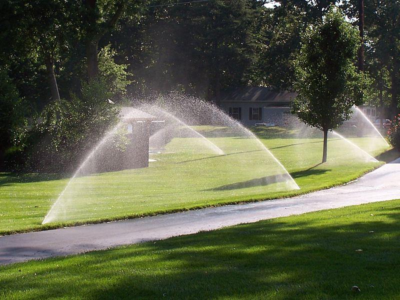 сад, поливание, уход, растения, газон, трава