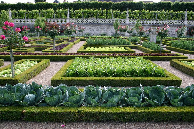 сад, огород, советы, практичность, функциональность, сад, город, рослини, квіти, декор