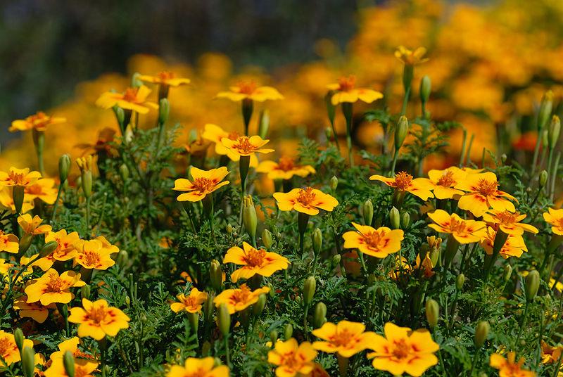 самосев, пересадка, растения, семена, поливание, уход, сад, горшки, дом, цветы, земля, почва,советы