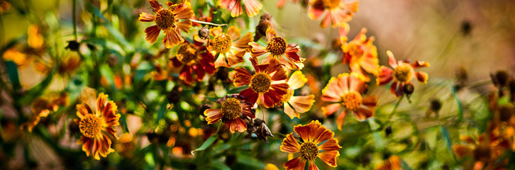 Осенние цветы для Вашего сада