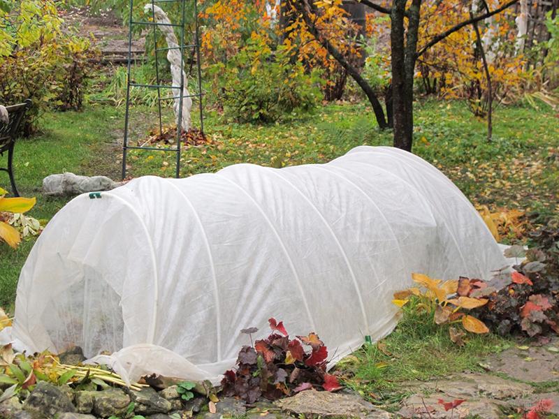 агроволокно, захист, рослини, догляд, зима, наривання, защита, растения, уход, советы