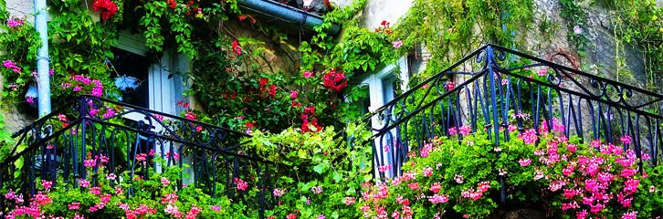 балкон, озеленення, догляд, рослини, сад, цветы, горшки, хризантемы