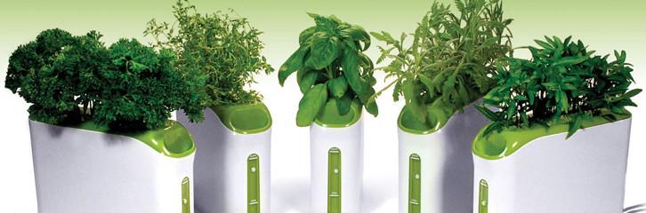 гідропоніка, догляд, рослини, квіти, поради, технологии, растения, советы, гидропоника
