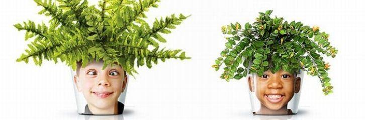 горшок, вазон, уход, смех, растения, декор, дизайн, квіти