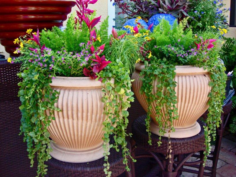 Выращивание уличных растений в горшках 68