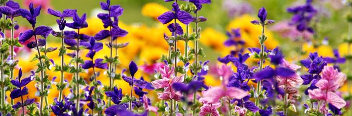 квіти, луг, сад, рослини, уход, советы