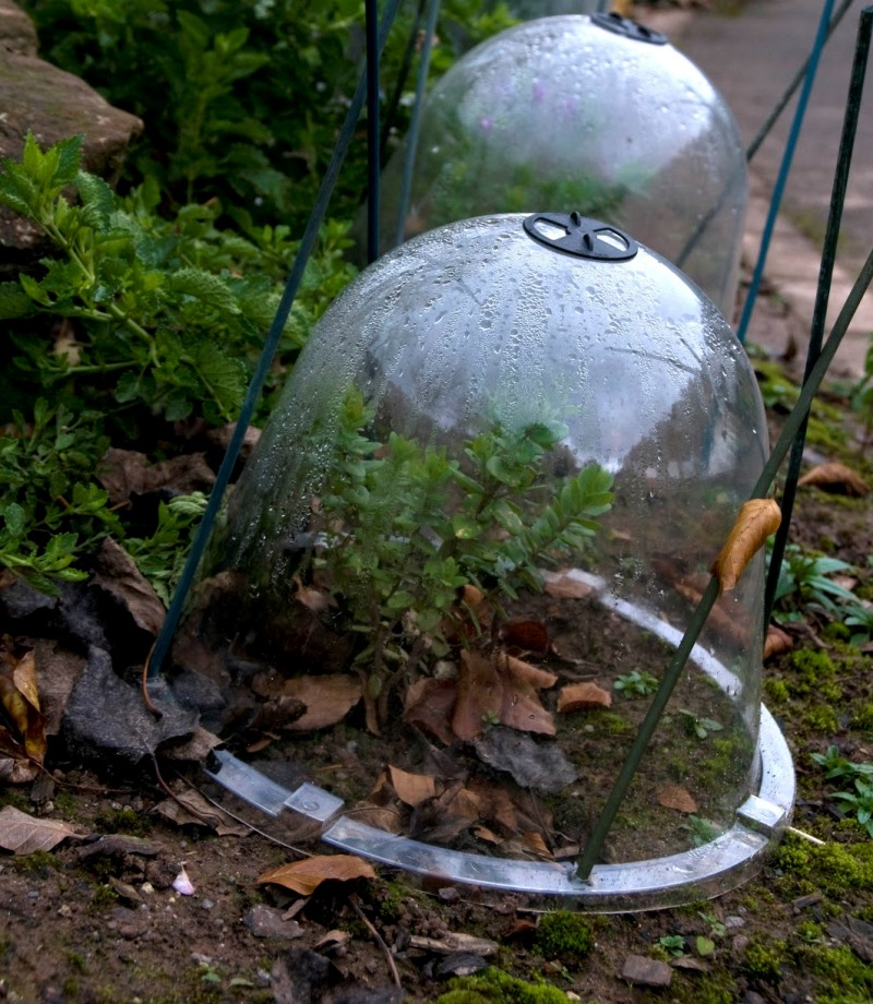 защита, растения, зима, сад, советы, уход, догляд, захист, рослини, зима