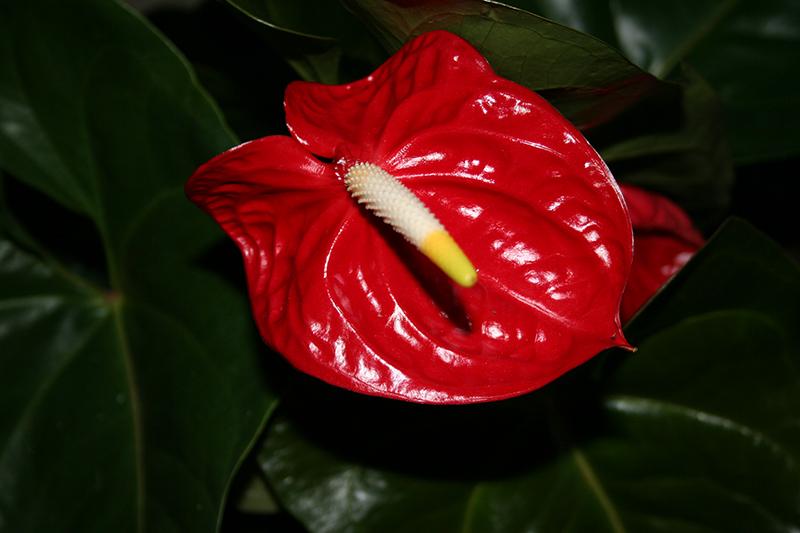 яд, растения, уход, советы, цветы, коти, тварини, квіти, отрута, сад, рослини