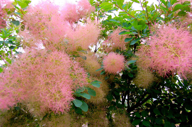 піщаний сад, уход, растения, советы, цветы