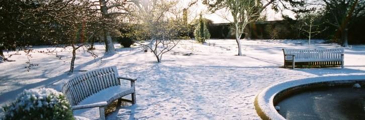 сад, зима, уход, растения, цветы, советы, поради, рослини, квіти
