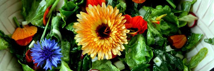 салат, квіти, рослини, їжа, уход, кулинария, цветы, еда