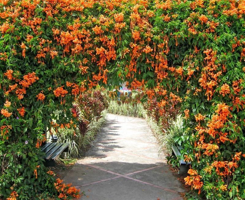 жимолость, растения, цветы, сад, уход, советы, догляд, рослини, поради