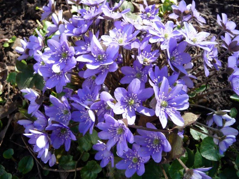 сад, цветы, тень, советы, почва, грунт, земля, уход, растения
