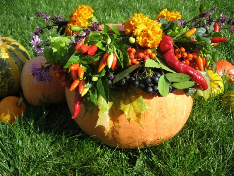 Экологически чистый сад, натуральніе средства, биологические добавки, препараты, вредители, болезни растений, сад, уход, цветы, советы