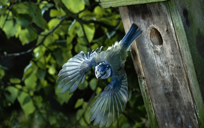домик, птички, уют, сад, комфорт, растения, цветы, насекомые, дизайн, кормушки