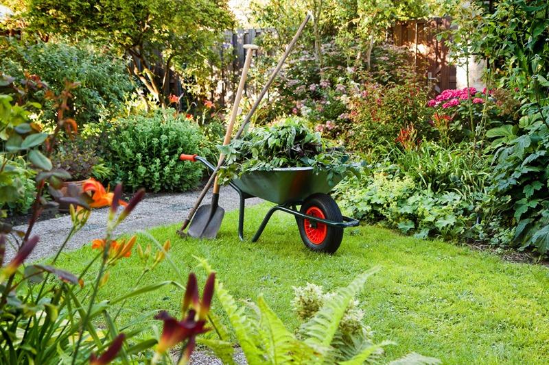 сад, червень, догляд, рослини, квіти, поливання, поради, грунт, підживлення, почва, уход, советы, цветы, июнь