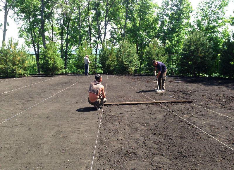 газон, уход, советы, трава, сад, поливание, посев, семена, аерация