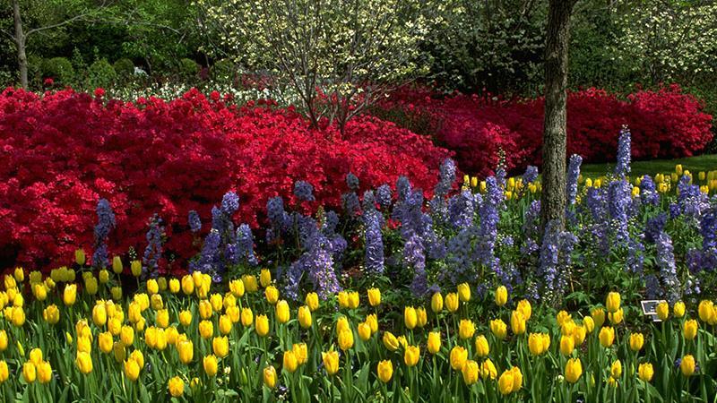 цвета, яркость, сад, уход, психология, выбор, декор, фиолетовый, желтый, синий, белый