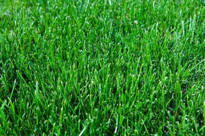 трава, газон, сорняк, уход, поливание, почва, советы, растения, цветы