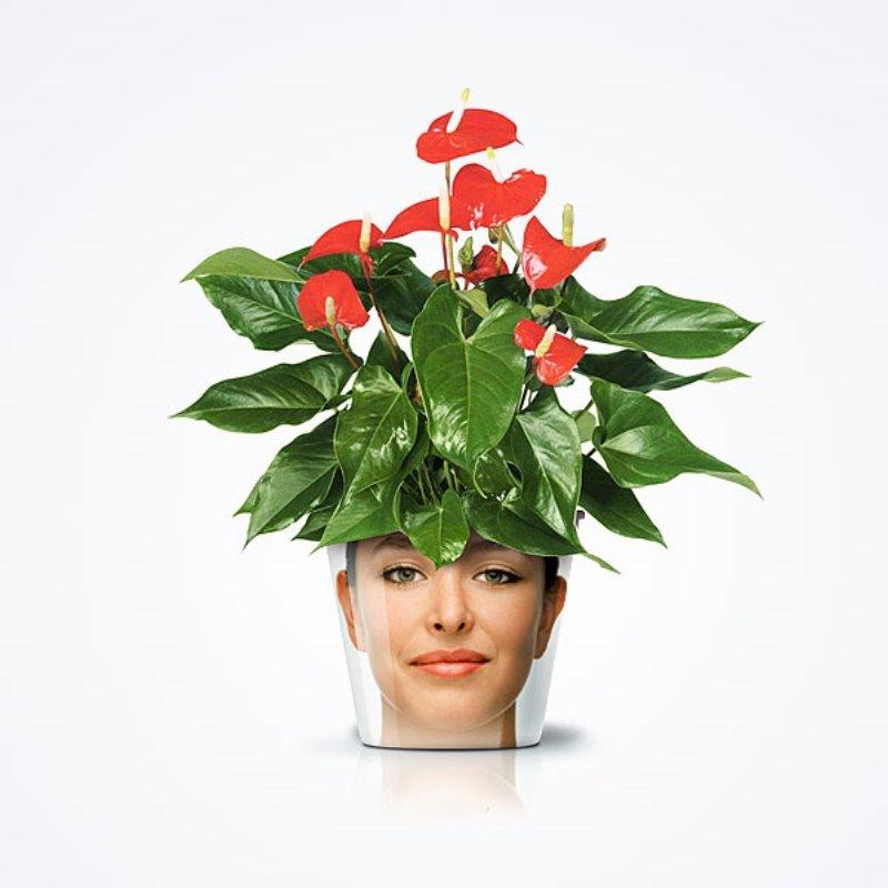 сад, цветы, растения, Валентина, подарки, букеты