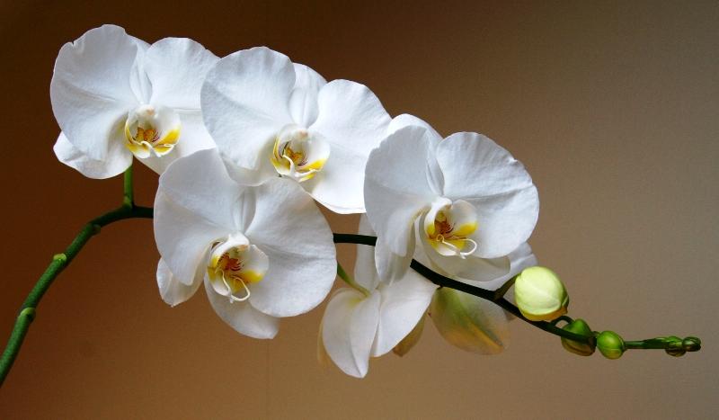 сад, уход,советы, поливание, цветы, растения, красота, орхидеи, добавки, компост