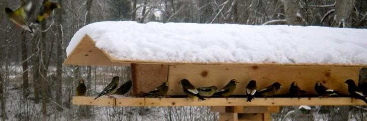 сад, кормушка, фидер, уход, птички, зима, питание, уборка