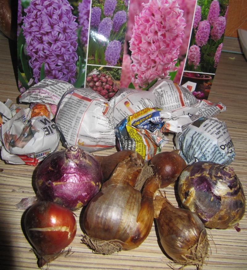 сад, уход, советы, растения, вода, дождь, луковичные, цветы