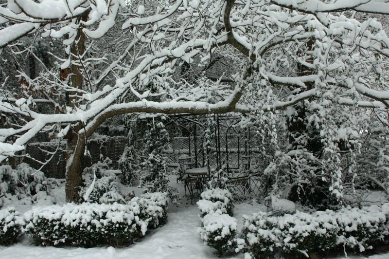 сад, уход,советы, поливание, уборка, цветы, растения, красота, декор, январь