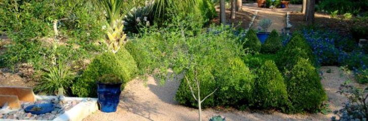 март, уход, сад, уборка, поливание, газон, цветы, растения