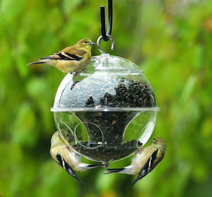 кормушка, птички, фидер, сад, растения, цветы
