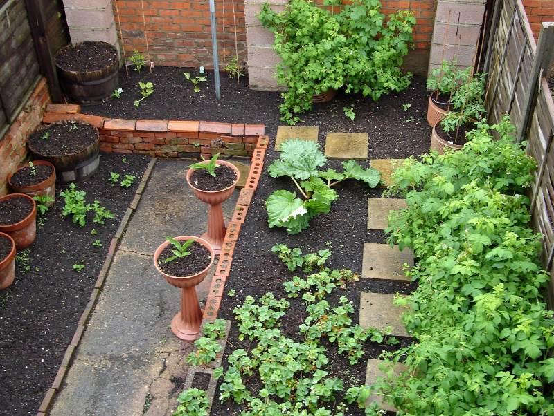 концепция, сад, огород, растения, уход, дизайн, декор, советы,
