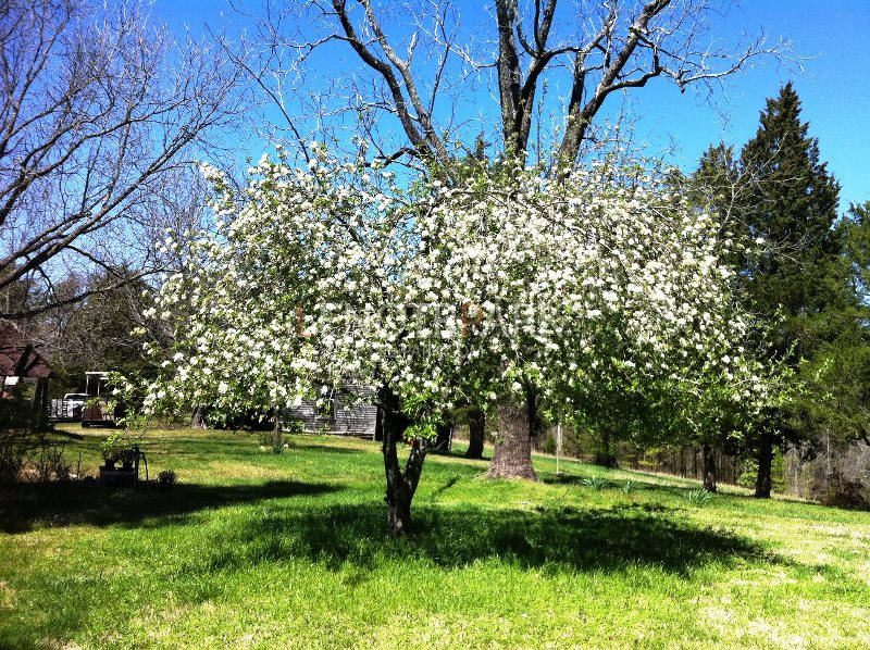 сад, уход,советы, поливание, уборка, цветы, растения, красота, декор, подрезание, формирование