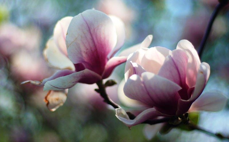 деревья, сад, цветы, растения, цветут, яркие, цвета, акценты